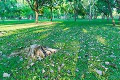 L'arbre a été coupé dans le jardin et beaucoup l'arbre a l'éclairage du lever de soleil i Image libre de droits