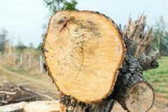 L'arbre a été coupé dans les morceaux Images stock