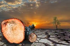 L'arbre a été coupé dans les morceaux Photographie stock