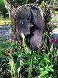 L'arbre a été coupé il y a bien longtemps Image libre de droits