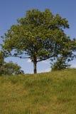 L'arbre photo libre de droits