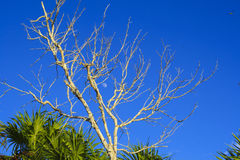 L'arbre image libre de droits