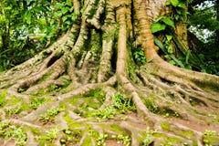 L'arbre Photos libres de droits