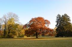 L'arbre au milieu d'une clairière images stock