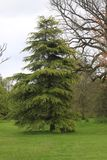 L'arbre avec partent Photos libres de droits
