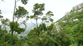 L'arbre bascule la montagne de vue banque de vidéos