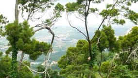 L'arbre bascule la montagne de vue clips vidéos
