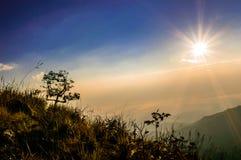 L'arbre beau au lever de soleil images libres de droits
