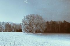 L'arbre a capturé à différentes heures de l'année Image libre de droits