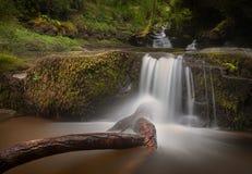 L'arbre cassé chez Blaen y Glyn Waterfalls Images stock