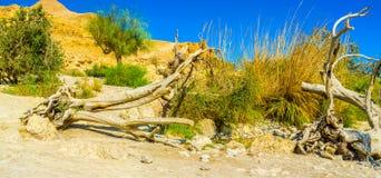 L'arbre cassé dans le désert Photos libres de droits