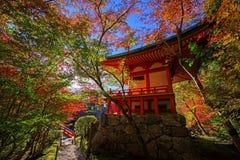 L'arbre coloré part autour du temple de Daigoji, Kyoto images libres de droits