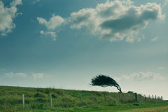 L'arbre courbé Photos libres de droits
