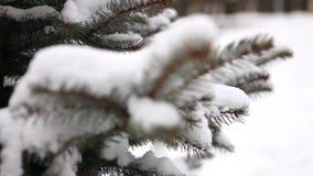 l'arbre couvert de neige, neige se trouve sur les branches d'un arbre, arbres de Noël dans la neige clips vidéos