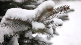 l'arbre couvert de neige, neige se trouve sur les branches d'un arbre, arbres de Noël dans la neige banque de vidéos