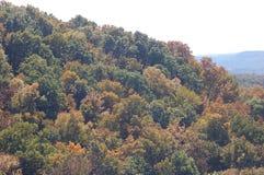 L'arbre a couvert la montagne en Franklin, Tennessee Image stock