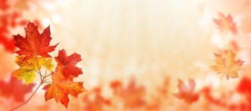 L'arbre d'érable du Canada part du fond horizontal rouge images stock