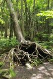L'arbre d'amour Photographie stock libre de droits