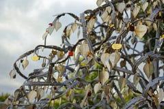 L'arbre d'amour avec le métal s'embranche, part et padlocks Images stock