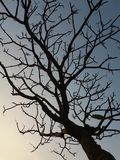 L'arbre d'automne photos stock