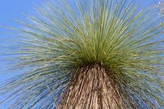 L'arbre d'herbe Photos stock