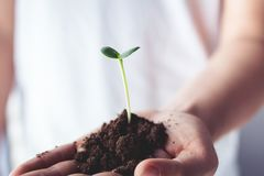 L'arbre d'usine d'arbres, les gens tiennent, aiment le monde, aiment la nature, plantant des arbres Photo libre de droits