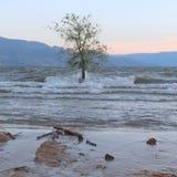 L'arbre dans l'eau avec l'éclaboussement ondule sur le tronc d'arbre photo libre de droits