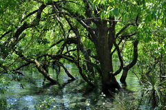 L'arbre dans l'eau chez Huka tombe, le Nouvelle-Zélande Photos libres de droits