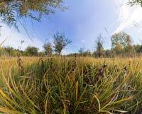 L'arbre dans l'herbe verte grande en automne Pano stéréographique Image libre de droits
