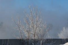 L'arbre dans le gel froid d'hiver Photo libre de droits