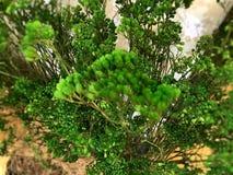 L'arbre dans le mail Photos libres de droits