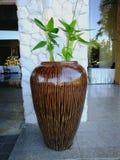 L'arbre dans le pot devant l'hôtel Photo stock
