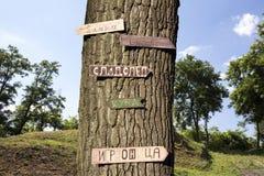 L'arbre dans les bois avec se connecte le Images libres de droits