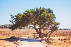 L'arbre de l'amour en Chypre dans un domaine de blé est un banc pour la relaxation et la relaxation, pejazhaz sur un fond blanc Photographie stock