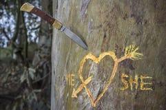 L'arbre de bouleau avec le coeur découpé a croisé par une flèche d'amour Photographie stock libre de droits