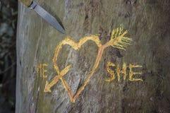 L'arbre de bouleau avec le coeur découpé a croisé par une flèche d'amour Photographie stock
