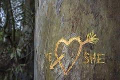 L'arbre de bouleau avec le coeur découpé a croisé par une flèche d'amour Image stock