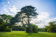 L'arbre de brouillard avec la lumière du soleil Image libre de droits