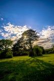 L'arbre de brouillard avec la lumière du soleil Images libres de droits