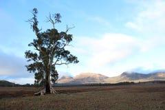 L'arbre de Cazneaux Photo libre de droits