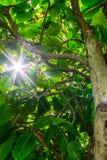 L'arbre de dessous et la lumière du soleil Image libre de droits