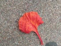 L'arbre de flamme Photographie stock libre de droits