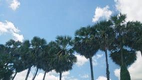 L'arbre de Grern photos libres de droits