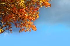 L'arbre de hêtre d'automne laisse à nuage orageux le ciel bleu Photographie stock libre de droits
