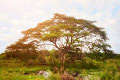 L'arbre de l'Afrique à l'arrière-plan de ciel images stock