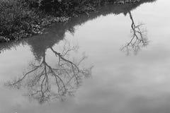L'arbre de la mort se reflètent dans l'abrégé sur noir et blanc effet de film de l'eau Photos libres de droits