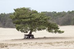 L'arbre de marche soesduinen la Hollande-Septentrionale photographie stock