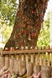 L'arbre de massacre contre lequel les bourreaux battent des enfants - massacre de Choeung Ek met en place image stock