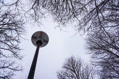 L'arbre de neige brunched sur le ciel avec une lanterne Photo libre de droits