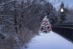 L'arbre de Noël couvert par neige rougeoie comme par magie dans cette scène d'hiver Images libres de droits
